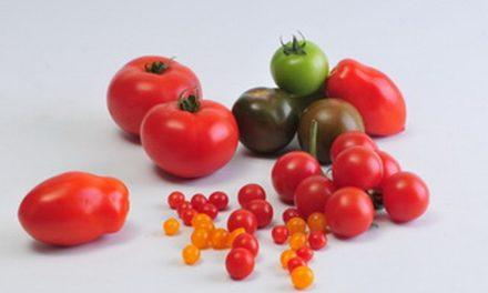 Bedeutung der Molekülgrößen für den Geschmack