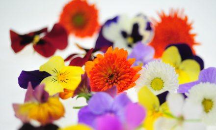 Blattsalat-Zubereitungen mit Essig und Öl – Warum eigentlich?